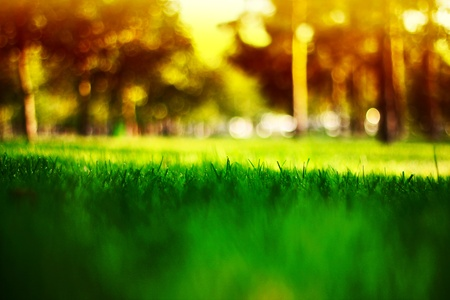 years of warm light on the green grass in focus at the center Stock Photo