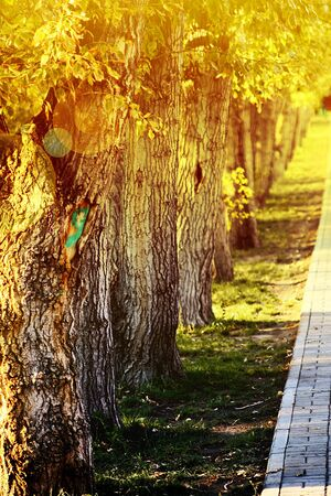 trees in a row Stock Photo - 8519193