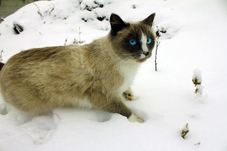 lince rojo: Muñeca de trapo de invierno gato de la nieve