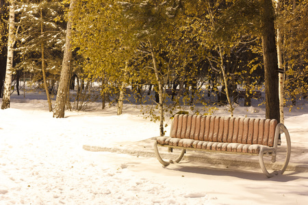 Snow-covered trees and benches in the city park.