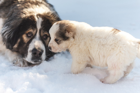 running nose: Dog mom puppy sad looks at puppy in winter