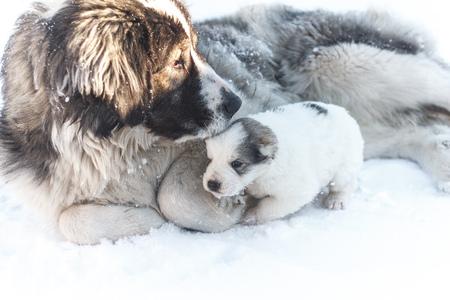 cute puppy and big dog