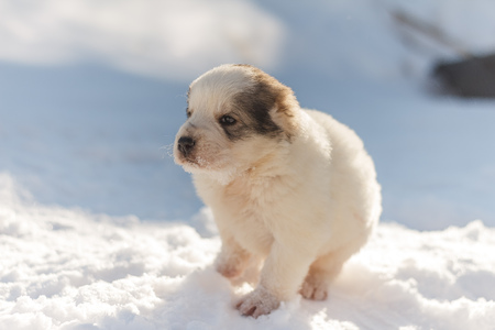 cute puppy in the snow frozen winter cold Stock Photo