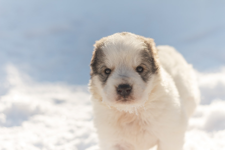 cute puppy looks into the camera, winter background Stock Photo
