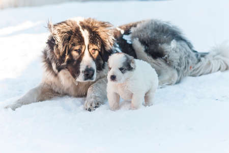big dog and her puppy froze in the snow winter