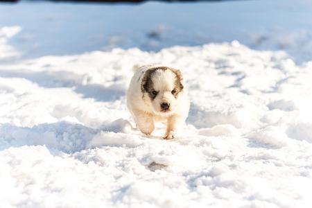 Puppy happily runs through the snow