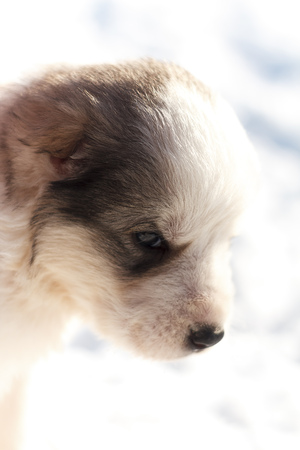 head puppy on a white background Stock Photo