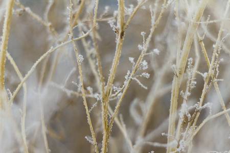 frost on dry grass