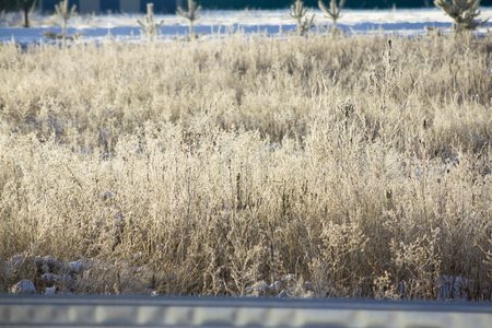winter high grass background