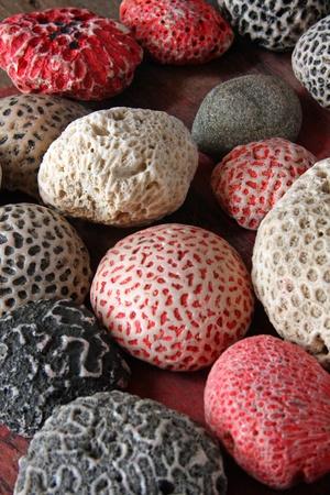 brain coral: Brain Coral