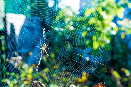 The big beautiful spider braids the web Stock Photo