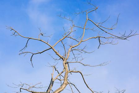 toter baum: Zweig der toten Baum und Himmel Lizenzfreie Bilder