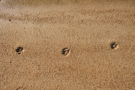 mutts: Dog footprints in the sand