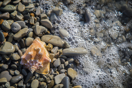 water s edge: Seashell on sand and pebble beach by the sea.