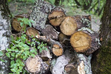 Leña apilada en los registros de woodpile al aire libre Foto de archivo