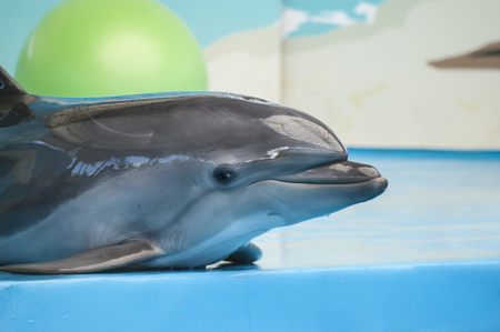 dolphinarium: Cute young smiling dolphin in the dolphinarium Stock Photo