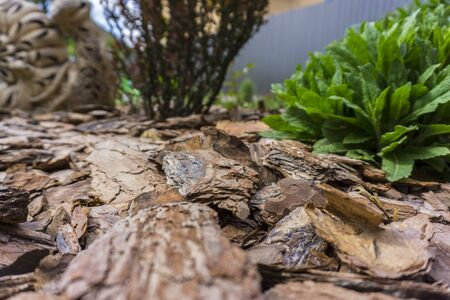 Tree bark for decoration and mulching in landscape design. Crushed tree bark texture background closeup.