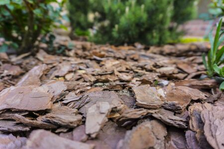 Tree bark for decoration and mulching in landscape design. Tree bark texture background closeup.
