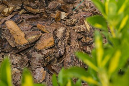 Tree bark for decoration and mulching in landscape design. Crushed tree bark texture background close-up.