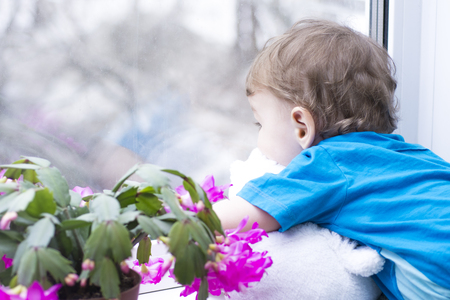 looking at baby: Little boy looking thoughtfully into the foggy window. Beside him on the windowsill flowers bright Schlumbergera. Waiting for a nice and new.