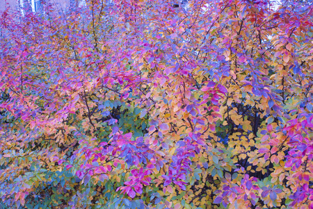 Background Color Autumn Colorful Leaves Wallpaper Stock Photo