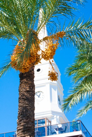 fatih: Date palm against the sky. Boulevard of Ataturk in Turkey. Stock Photo
