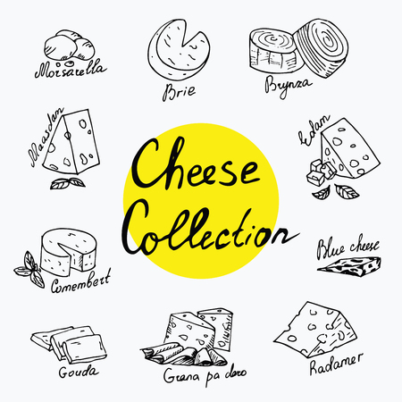 brie: Cheese collection. Vector illustration of cheese types in hand drawn style. Cheese Isolated on white. Different types of cheese. Images can be used on packaging and in advertising.