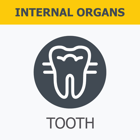 organos internos: Los �rganos internos - diente. La familia y un estilo de vida saludable. Iconos m�dicos infogr�ficas, �rganos humanos, anatom�a corporal. Iconos de vector de �rganos humanos Dise�o plano interno. Los �rganos internos iconos.