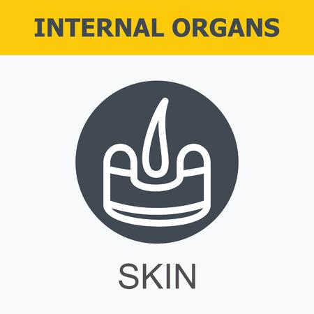 Les organes internes - peau. Famille et un mode de vie sain. Medical icons infographiques, les organes humains, anatomie du corps. icônes vectorielles d'organes humains Design plat interne. Les organes internes des icônes. Vecteurs