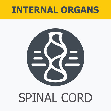 spinal: Internal organs - spinal cord. Family and a healthy lifestyle. Medical infographic icons, human organs, body anatomy. Vector icons of internal human organs Flat design. Internal organs icons.