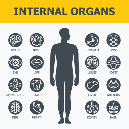 heart health: Internal organs set. Medical infographic icons, human organs, body anatomy. Vector icons of internal human organs Flat design. Internal organs icons. Internal organs icons art.