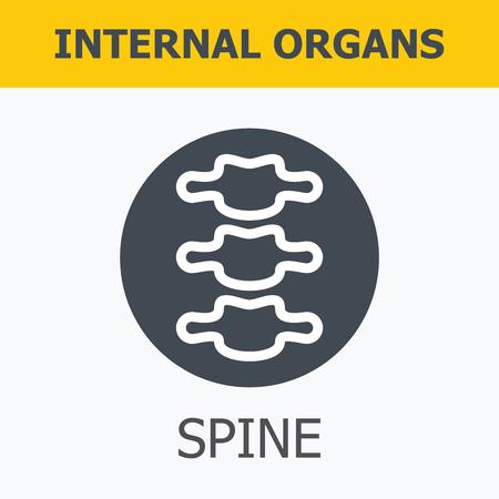 organos internos: - Los �rganos internos de la columna vertebral. La familia y un estilo de vida saludable. Iconos m�dicos infogr�ficas, �rganos humanos, anatom�a corporal. Iconos de vector de �rganos humanos Dise�o plano interno. Los �rganos internos iconos.