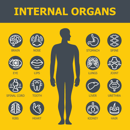 human icons: Internal organs set. Medical infographic icons, human organs, body anatomy. Vector icons of internal human organs Flat design. Internal organs icons. Internal organs icons art.