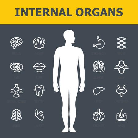 Ensembles d'organes internes. Icônes infographiques médicales, organes humains, anatomie corporelle. Icônes vectorielles d'organes humains internes. Design plat. Icônes des organes internes. Icônes d'organes internes art.