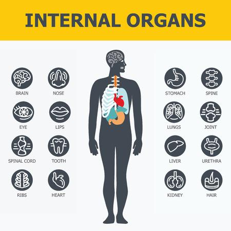 内臓を設定します。医療インフォ グラフィック アイコン、臓器、身体解剖学。人間の内臓のフラット デザインのアイコン。内臓アイコン。内臓ア