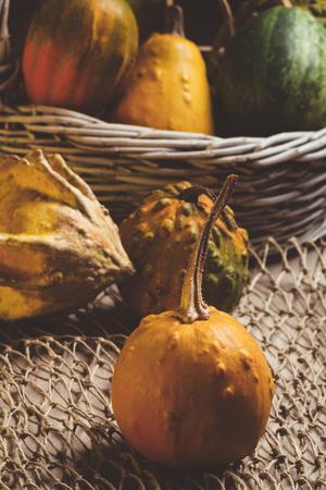 gourds: Gourds still life