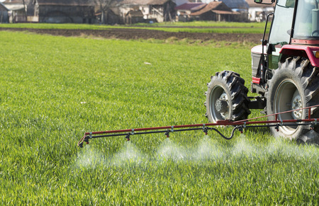 pesticides: Tractor spraying wheat field with sprayer, pesticides and herbicides Stock Photo
