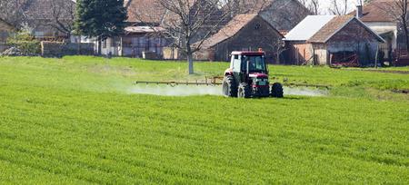 Farmer spraying wheat field at spring season, herbicides, pesticides