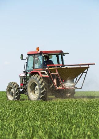 fertilizing: Farmer fertilizing wheat field with nitrogen