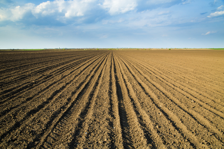 plough land: Arable land over blue sky