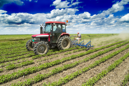 field crop: Cultivating field of young corn crops with row crop cultivator machine