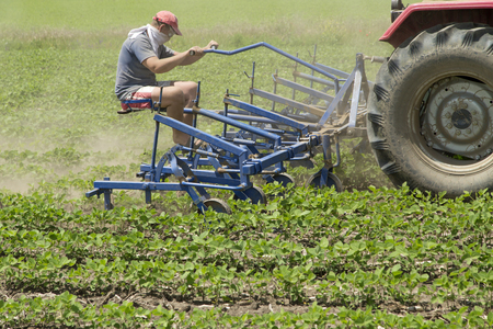 cultivator: Cultivating field of young soybean crops with row crop cultivator machine Stock Photo