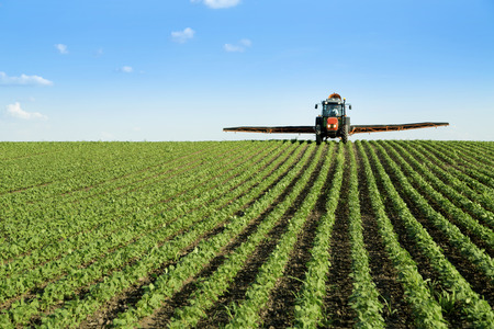 spraying: Tractor spraying soybean crop field