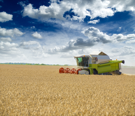 Kombajny zbożowe w akcji na polu pszenicy Zdjęcie Seryjne