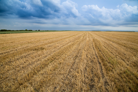 stubble: Wheat stubble field over stormy cloudscape Stock Photo