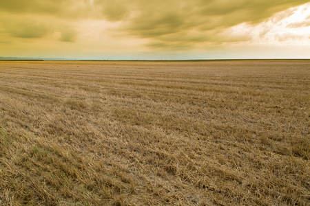 stubble: Wheat stubble field over yellow cloudscape Stock Photo