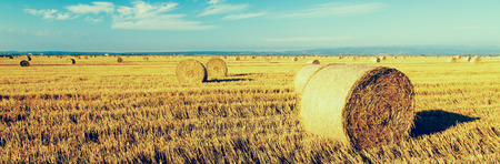 the residue: Wheat roll bales at field, sunrise scene Stock Photo