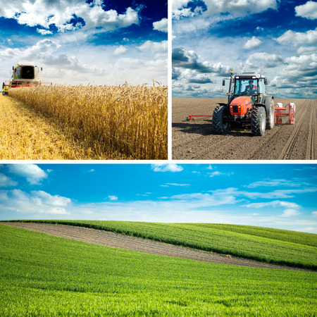 combine harvester: Agricultural collage, various farming photos in one.