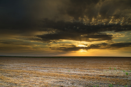 stubble: Wheat stubble field over nice sunset, hdr image