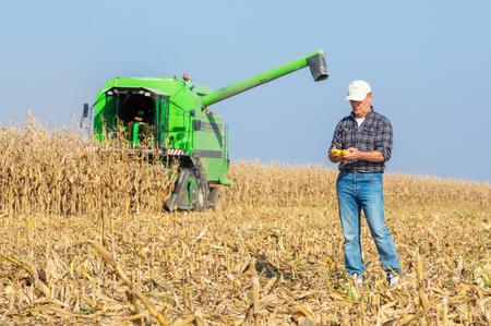 mazorca de maiz: Granjero que revisa mazorcas de ma�z durante la cosecha en el campo de la temporada